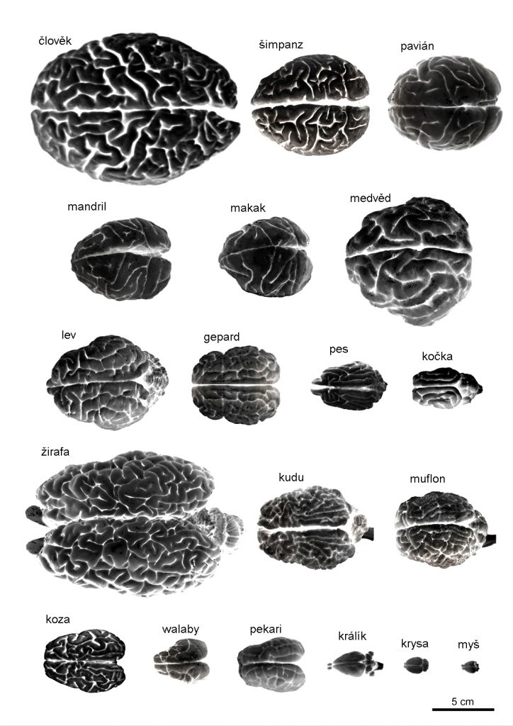 mozky_140-4